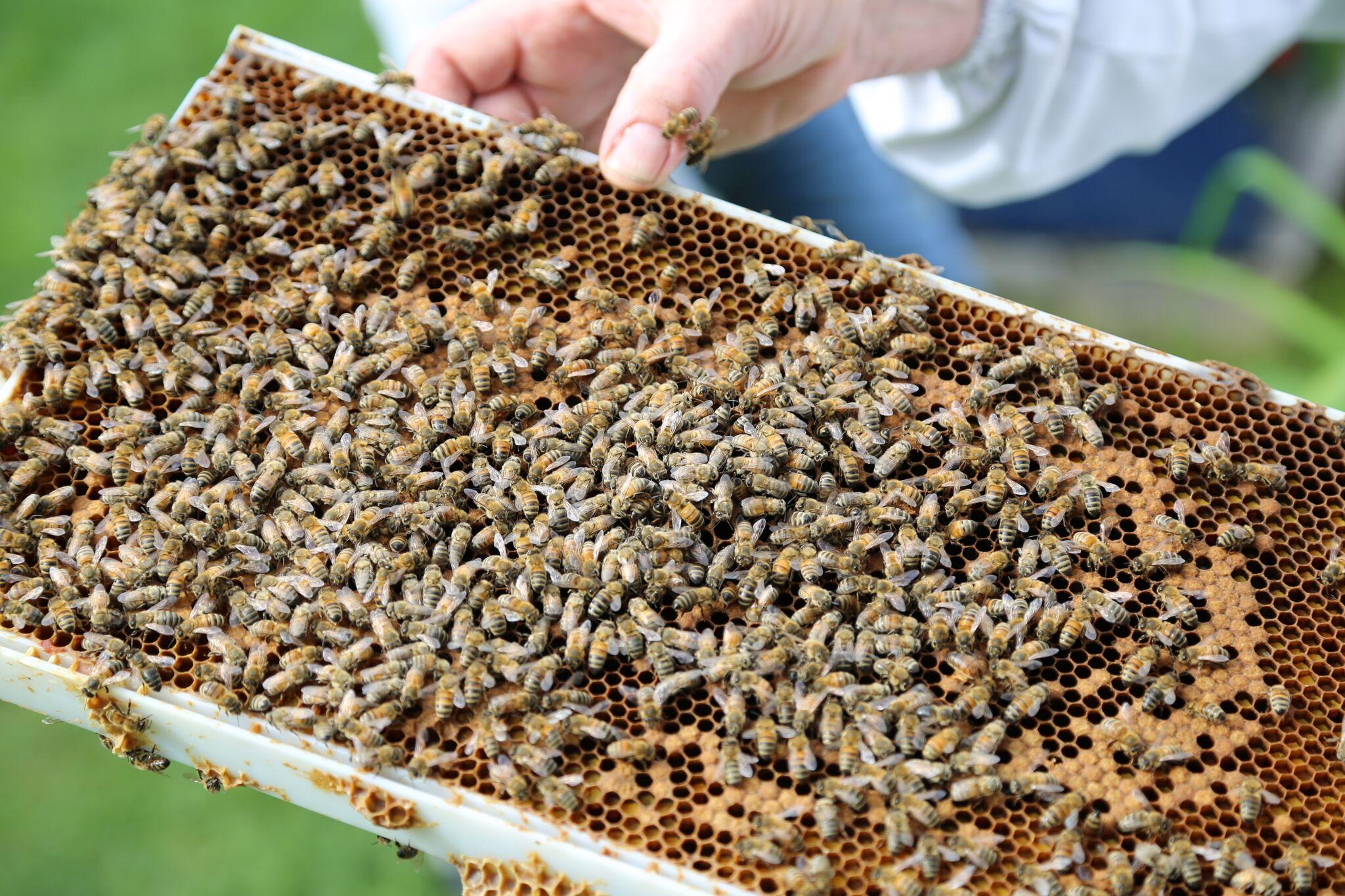 Découvrir l'univers fascinant des abeilles chez Intermiel
