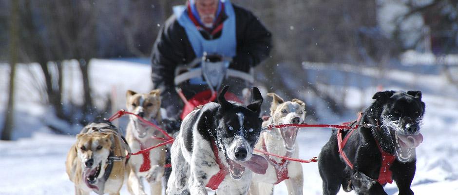 Place à l'Internationale de chiens de traîneaux de Lanaudière